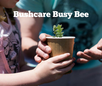 Community Bushcare Busy Bee - Friday August 24 image