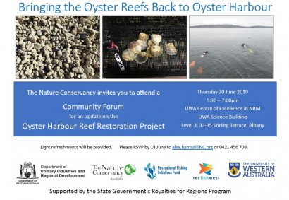 Bringing the Oyster Reefs Back to Oyster Harbour image