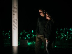 Field of Light: Avenue of Honour reaches 100,000 attendees in four months image
