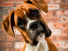 Dog attacks prompt plea to owners image
