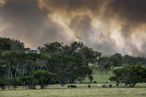 Agencies praised for quick response to emergency bushfire image